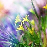 flowers :: Виктория Воробьёва