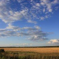 Ах поле, поле, поле, ты шикарно :: Таня Смирнова