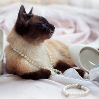 Свадебный котик :: Елена Ткаченко
