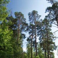 Лесные дороги :: Юрий Кольцов