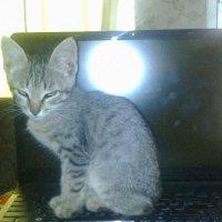 Кот ученый :: Любовь Игнатова