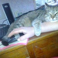 Сладкий сон. :: Любовь Игнатова