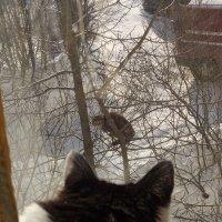 кото-серенада под окном :: Сергей Па