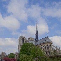 Notre Dame de Paris. :: Ольга