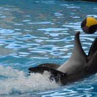 В дельфинарии :: Алла Попова