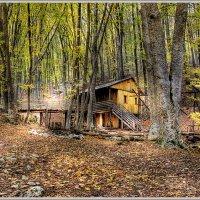 Лесной маяк :: Валерий Басыров