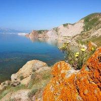 весенние краски побережья :: viton