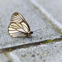 Бабочка :: Анастасия Бондарева