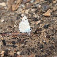 Бабочка :: Света Покутнева