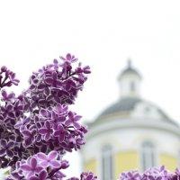 Сирень у церкви :: Алексей Селиванов