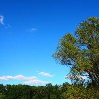 дерево :: Стася Ключникова