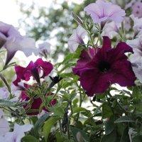 Яркие цветы :: Ксения Бреева