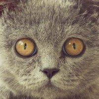 Кошка4 :: Леся Сварицевич
