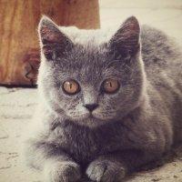Кошка3 :: Леся Сварицевич