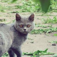 Кошка2 :: Леся Сварицевич