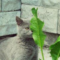 Кошка :: Леся Сварицевич