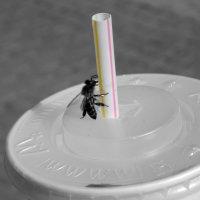 McDonalds&bee :: Максим Тарасов