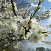Весна :: Максим Тарасов