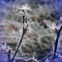Бенгальский огонь рождества :: Ольга Прилуцкая