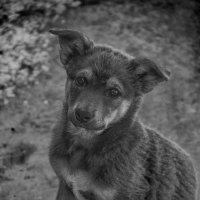 Бездомный щенок :: Илья Копылов