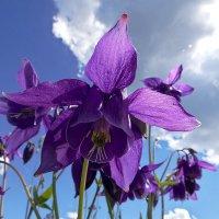 Цветорк и небо :: Андрей Дворников