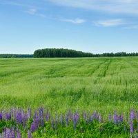 за полем, да за лесом :: Олег Ионичев