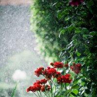 Під дощем :: Андрiй Боровський