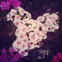 Цветы :: Леся Сварицевич