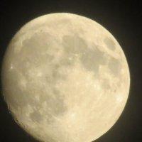 Луна :: Кристина Бобкова