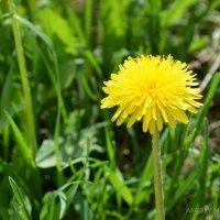 Желтый цветок :: Андрей Мирошниченко
