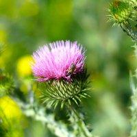 пчелка :: Бахытжан Акботаев