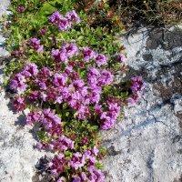 И на камнях растут цветы... :: Стил Франс