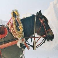 Лошадь тоже друг человека :: Elena Zykova