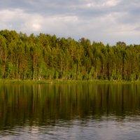 Лес :: Катерина Тарасова