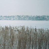 Пруд. Вид с острова. :: Elena Zykova