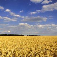 Урожай :: Максим Терновский