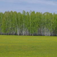одуванчиковое поле :: Валерий Гусельников