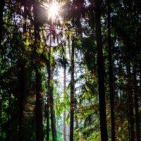 Таинственный лес :: Антон Лопуховский
