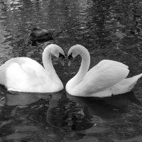 Вот это любовь! :: Надежда Грибута