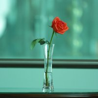Роза на столе. :: Алексей Власов