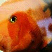 Рыба :: Victoria Agapova