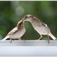 растем) :: linnud