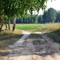 Дорога к лесу :: Ольга