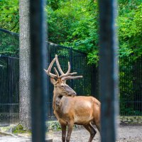Лесной Олень :: Света Кондрашова