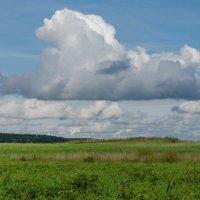 Облака...белогривые лошадки...... :: Елена Фролкова