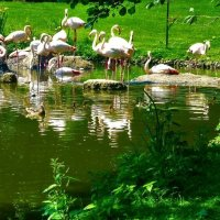Hamburg. Hagenbeck Tierpark :: Nina Yudicheva