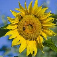Солнечное лето...! :: Ирина Шарапова