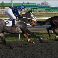 На финишной прямой :: Алексей Патлах