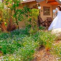 свадебный домик :: Екатерина Беникаускене