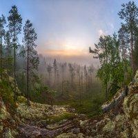 Из серии «Каменный берег заросшего болота» :: Фёдор. Лашков